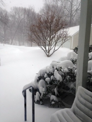 Here's a view of Laurel Heights by Emily Snow.