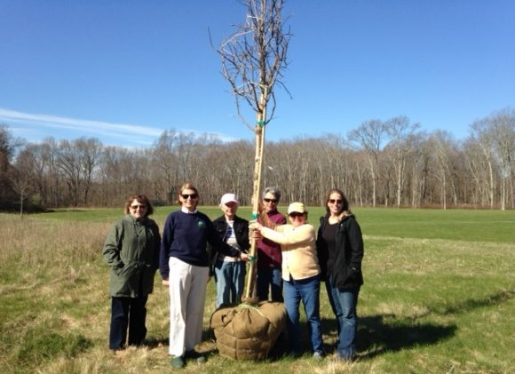 Members of the three groups gather around the new oak tree. From left to right are Kathy Burton, Joanne DiCamillo, Joan Flynn. Anne Bing, Emily Griswold and Barbara Rayel.